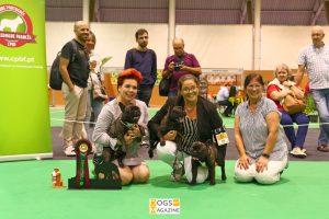 12ª Exposição Canina Especializada do CPBF
